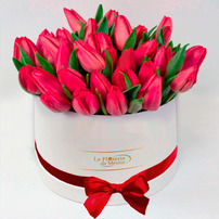 Caja Blanca de Tulipanes, Mexico